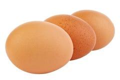 Tre uova marroni fotografie stock libere da diritti
