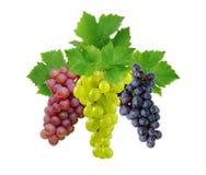 Tre uva con i fogli Immagine Stock