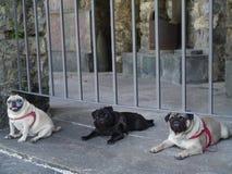 Tre vänner tillsammans: Cleo, Blacky och Spiderr som vilar efter ett långt, går royaltyfri foto