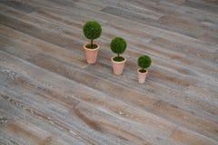 Tre växter på golvet Royaltyfri Foto
