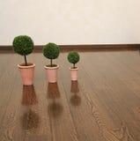 Tre växter på golvet Arkivbild