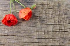 Tre vallmo på en träbakgrund Arkivfoto