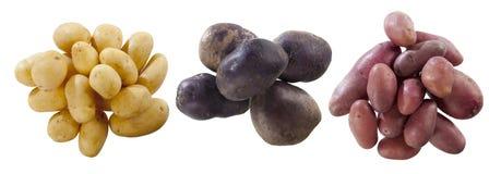 Tre varieta di patate 免版税库存图片