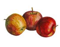 Tre vattenfärgäpplen Arkivfoto