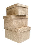 Tre wattled i cestini isolati su priorità bassa bianca Fotografie Stock Libere da Diritti
