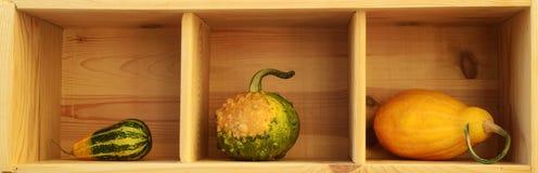 Tre zucche decorative Fotografie Stock Libere da Diritti
