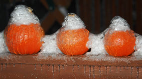 Tre zucche ghiacciate ad ottobre Fotografie Stock