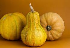 Tre zucche su un fondo arancio Immagini Stock