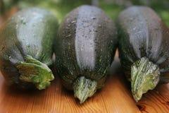 Tre zucchini Fotografie Stock Libere da Diritti