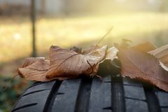 Tread of high performance car tire with autumn leaves in bright sunny light- car tuning and maintenance concept. Closeup view on tread of high performance car royalty free stock photos