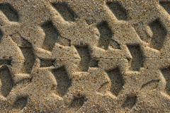 Tread Marks. Tire tread marks in wet sand royalty free stock photography
