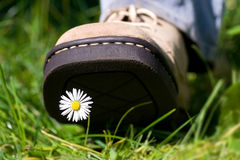 Treading on a daisy Stock Images