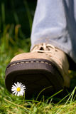 Treading on a daisy royalty free stock photos