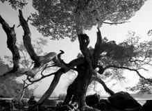 Treant Foto des Baums mit menschlich ähnlichem Schattenbild Lizenzfreie Stockfotos