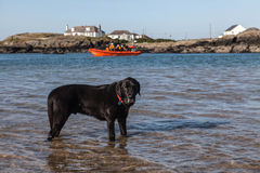 Trearddur Bay lifeboat Royalty Free Stock Image