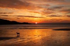 Trearddur Bay Sunset Royalty Free Stock Photo