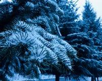 Treas 2018 зимы стоковое изображение