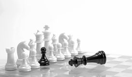 Treason. Chess game. White figures  in a row with black one and defeated black king. Treason or choice  concept. High key Royalty Free Stock Images