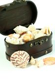 Treasure chest with cockleshells isolated on whit Stock Photos