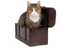 Treasure chest with snoopy cat Royalty Free Stock Photography