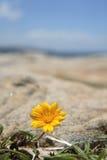 Treasure flower Royalty Free Stock Photography
