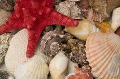 Treasure from the Ocean Stock Photos