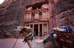 The 'Treasure' in Petra, Jordan. A camel in front of the treasure in Petra, Jordan, one of the most visited archaeological site of the Middle East stock photos