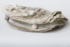 Treasure of the sea. One white pearl held on by an oyster shell Stock Photos