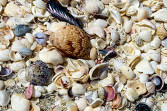 Treasure of seashells Royalty Free Stock Photos