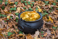 Treasure in the woods Stock Image