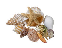 Treasurers of the Sea- Variety of Sea Shells Stock Photos