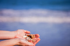 Treasures From Beach Royalty Free Stock Photos