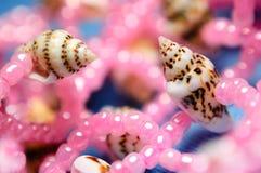 Treasures of the sea. Stock Photos