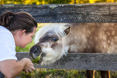 Treat for a pony Stock Images