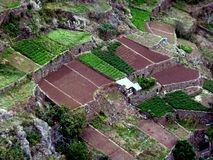 The treated areas of land. In Madeira Island Royalty Free Stock Images