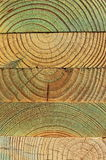 Treated Pine Woods Royalty Free Stock Photography