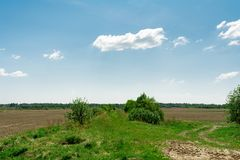 Sown field, traces of tractor wheels, forest on the horizon and blue sky with small clouds. Treated and sown field, traces of tractor wheels, forest on the Stock Image