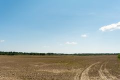 Sown field, traces of tractor wheels, forest on the horizon and blue sky with small clouds. Treated and sown field, traces of tractor wheels, forest on the Stock Images
