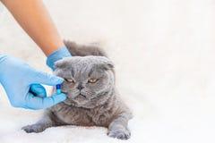 Treatment of cat pills. veterinary medicine. selective focus. Animal royalty free stock photography
