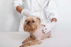 Treatment of dog Royalty Free Stock Photos