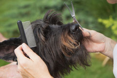 Treatment dog's head by crest Stock Photography