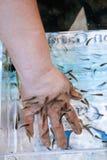 Treatment of psoriasis fish Garra rufa Royalty Free Stock Image