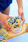 Treatment of a sea turtle. A sea turtle at 'Sea Turtles Conservation Center Royal Thai Navy', Thailand Royalty Free Stock Photography