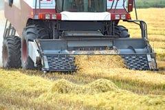 Trebbiatura pendente del riso della raccolta Raccolto del macchinario agricolo sul campo Fotografia Stock