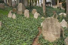 Trebic,捷克, 2016年4月23日:老犹太公墓,城市Trebic的老犹太部分在联合国科教文组织中是列出的 库存图片