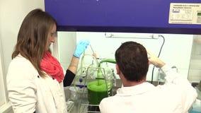 TREBON,捷克, 2015年11月2日:科学研究海藻科学家男人和妇女,小球藻生产,食物 股票视频