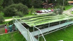 TREBON,捷克, 2015年9月20日:研究的科学家,男人和妇女,水是绿色的,海藻,小球藻生产 股票视频