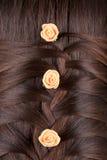 Treccia lunga dei capelli di Brown. Vista posteriore. fotografie stock libere da diritti