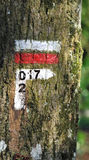 2017 on a treck markup. 2017 written on a red and white trek balisage painted on a tree Royalty Free Stock Images
