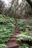Trecking path in the laurel forest, gomera Royalty Free Stock Images